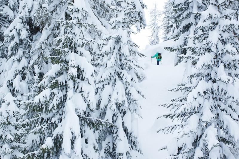 Ski de randonnée dans les sapins (Crédits : Elina.Sirparanta)