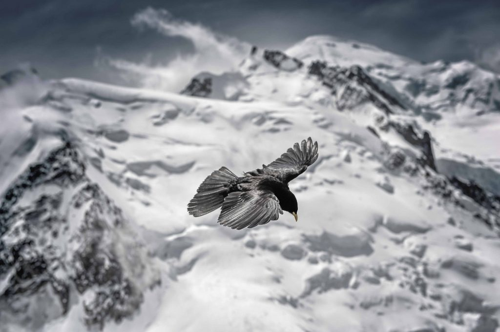 ©Pascal Pellet-Doyen